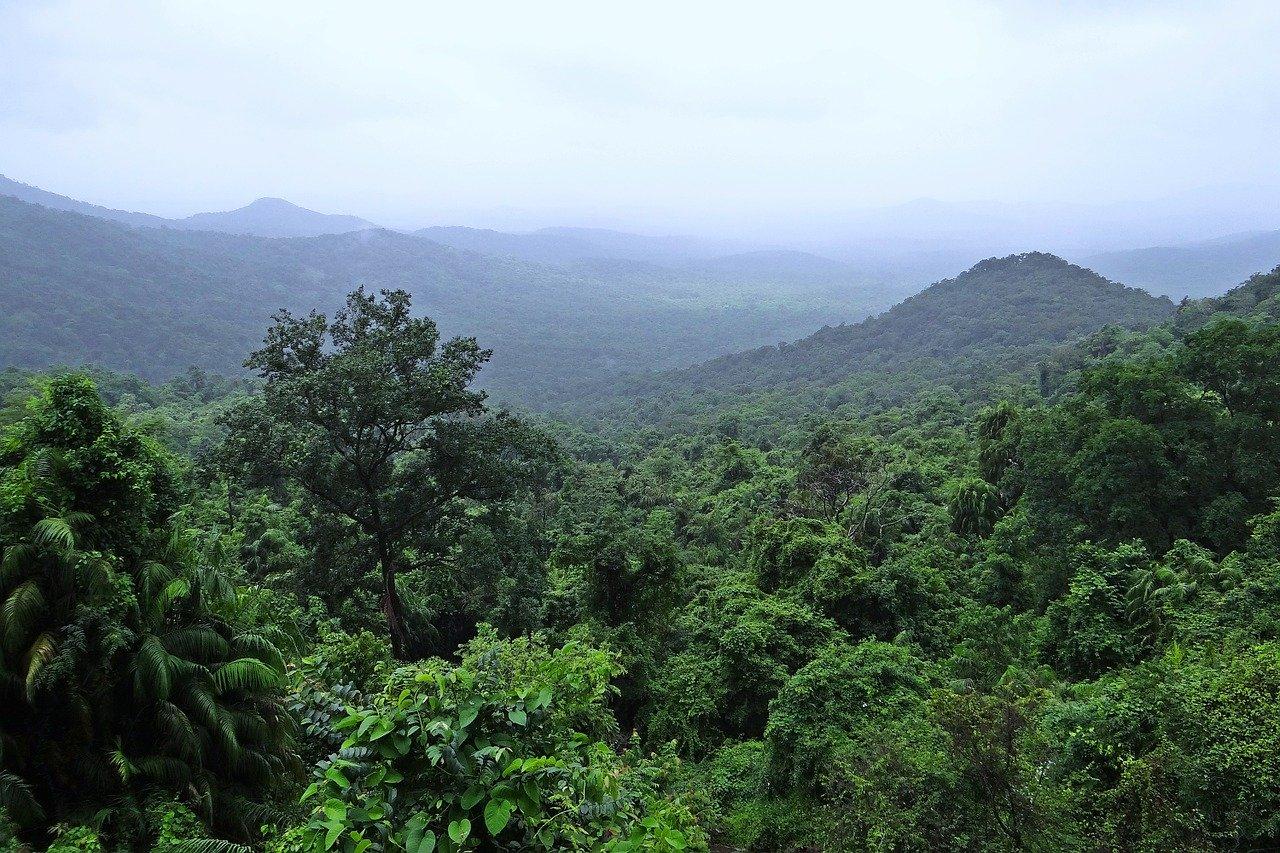 Forests & Rainforests Workshops for Schools