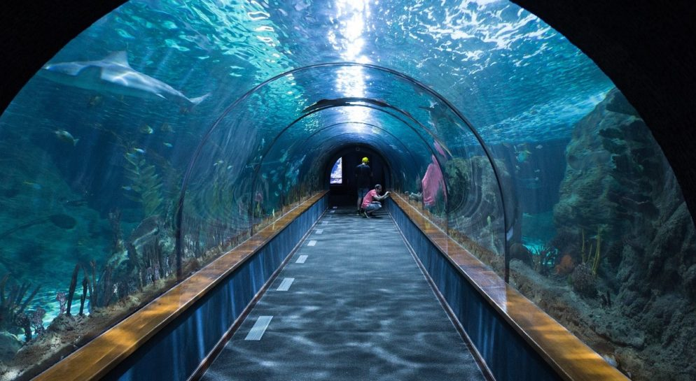 Aquarium and Sea Life Centres in Anglesey for School Trips