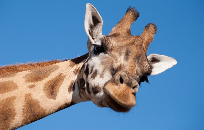 Wildlife Parks and Zoos for School Trips