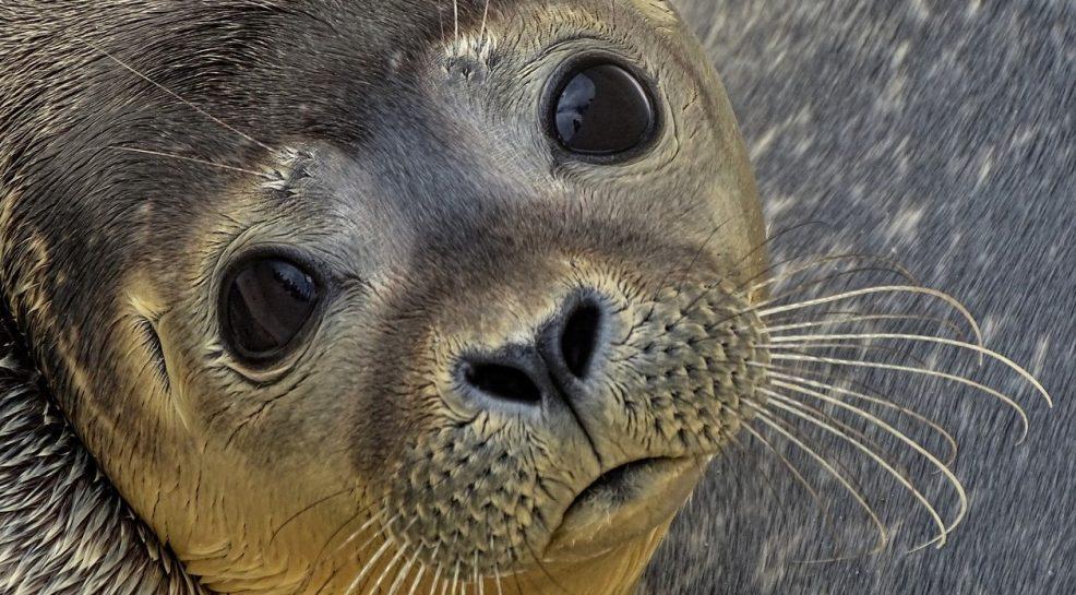 Sea Life Sanctuaries for School Trips